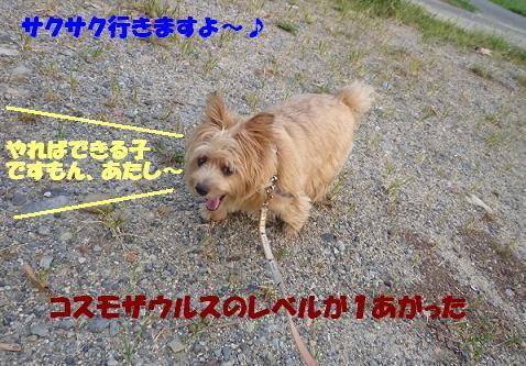a0154801_19265661.jpg
