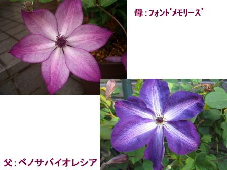 c0025140_18465199.jpg