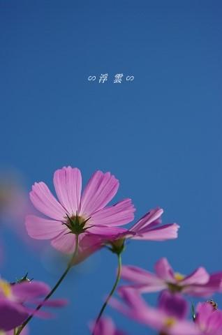 a0013721_912360.jpg