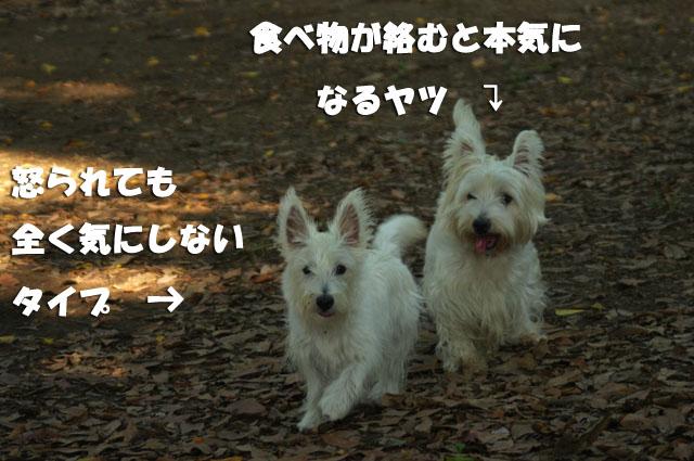 e0138005_0493419.jpg