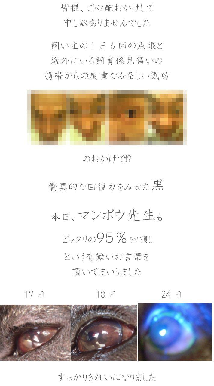 e0199784_1719697.jpg