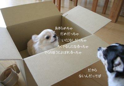 c0201883_012879.jpg