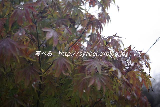 c0153764_20333261.jpg
