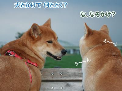 c0166018_1101388.jpg