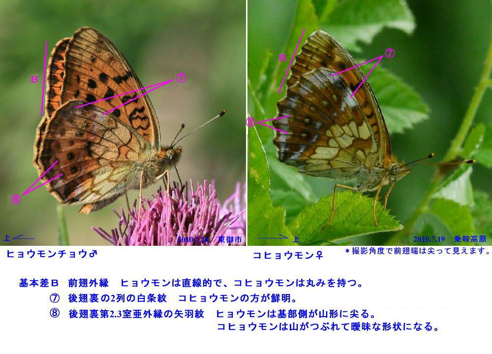 a0146869_2215255.jpg