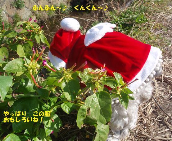 c0098501_201078.jpg