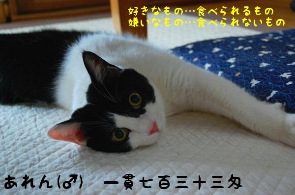 c0181639_19331466.jpg