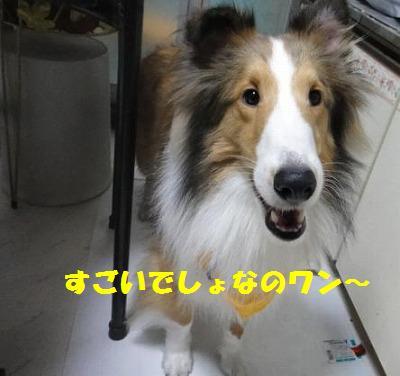 e0195743_1185241.jpg