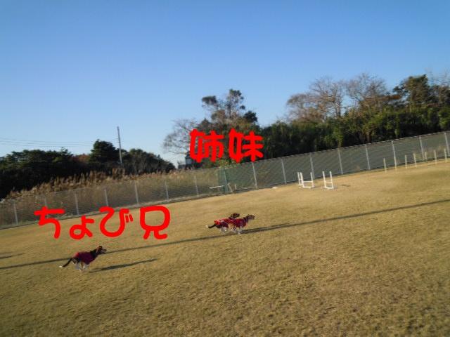 c0166622_174919.jpg