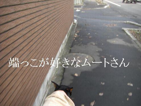a0114508_1431117.jpg