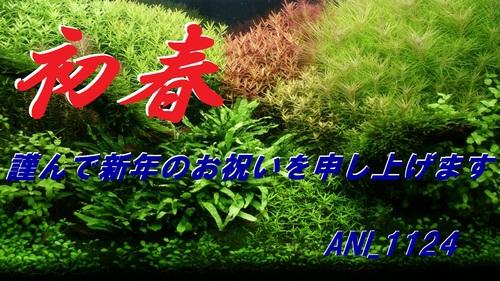 a0183301_1642108.jpg