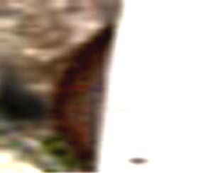 e0103408_1745051.jpg