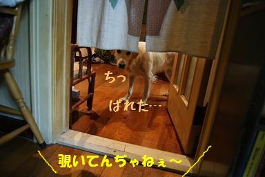 c0214455_14581973.jpg
