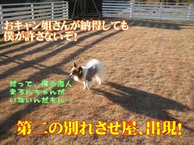 a0091865_226377.jpg