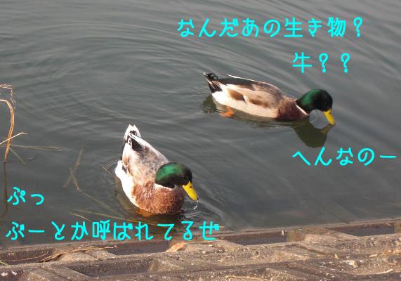 a0190132_0334497.jpg