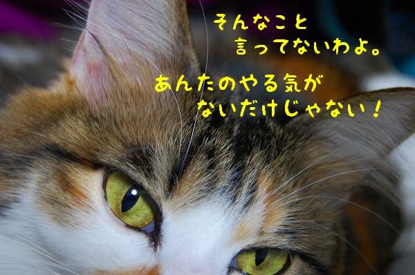 c0181639_0504146.jpg