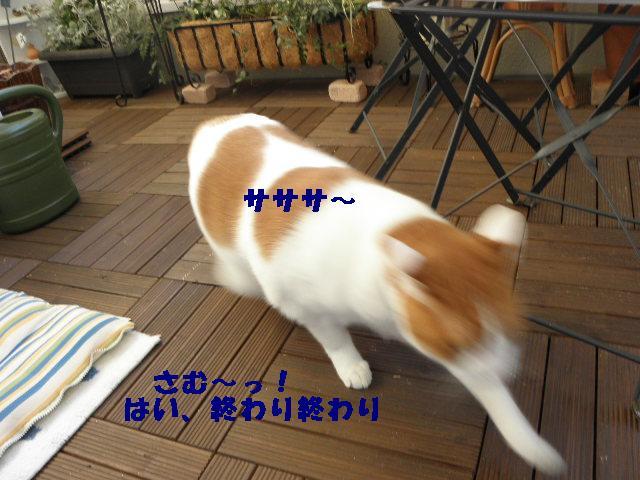 e0216469_17497100.jpg