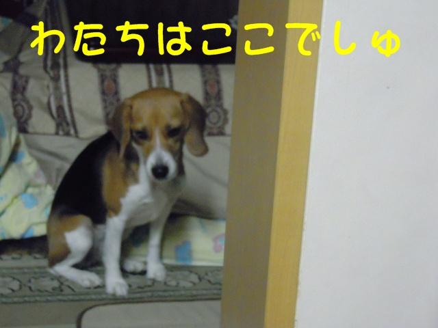 c0166622_1952846.jpg