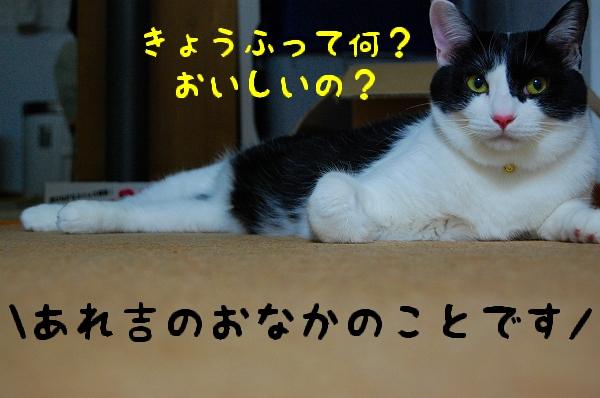 c0181639_1493655.jpg