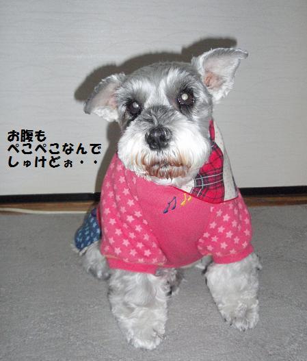 c0098501_20105664.jpg