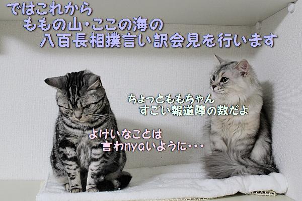c0211109_228064.jpg