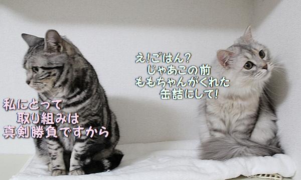 c0211109_2335169.jpg