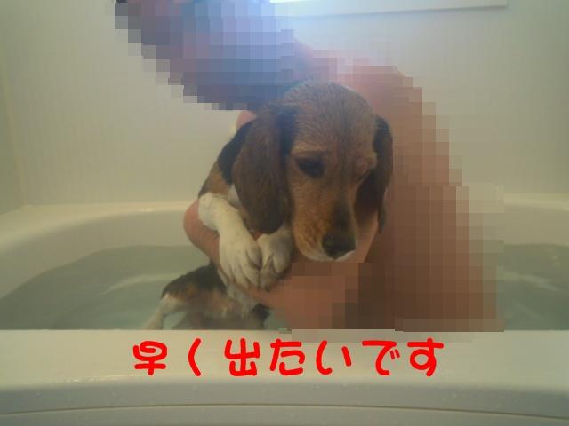 c0166622_1322032.jpg