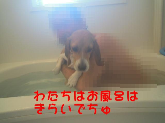 c0166622_1322777.jpg