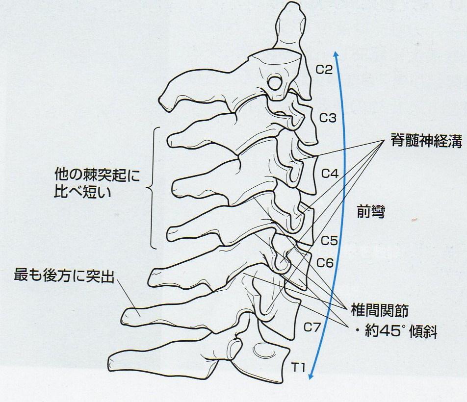 Spinous Process