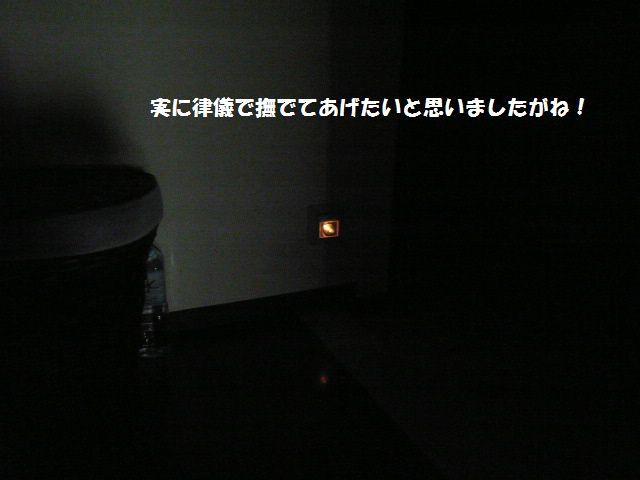 e0094407_22302633.jpg