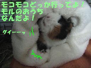 a0115597_16484581.jpg