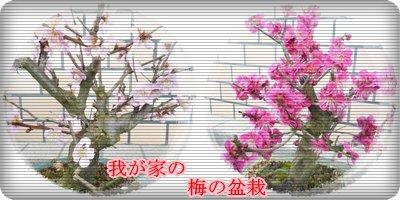 a0079409_21405068.jpg