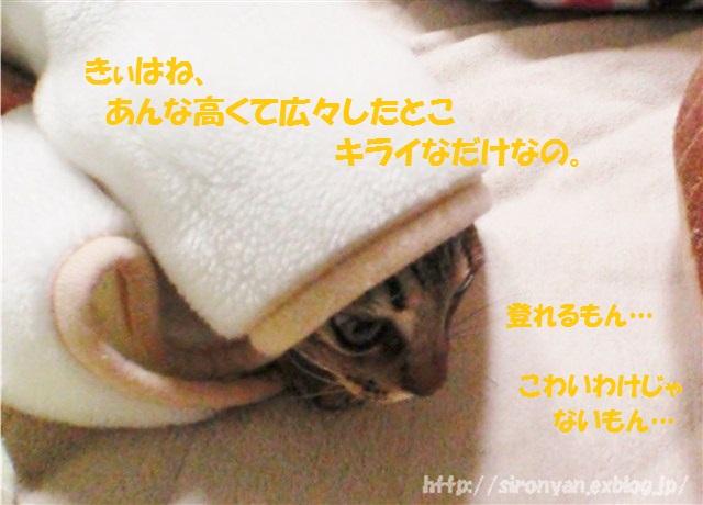 a0159490_129988.jpg