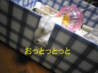 a0118951_21452139.jpg