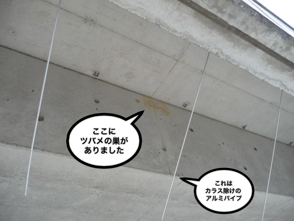 c0167798_1764159.jpg