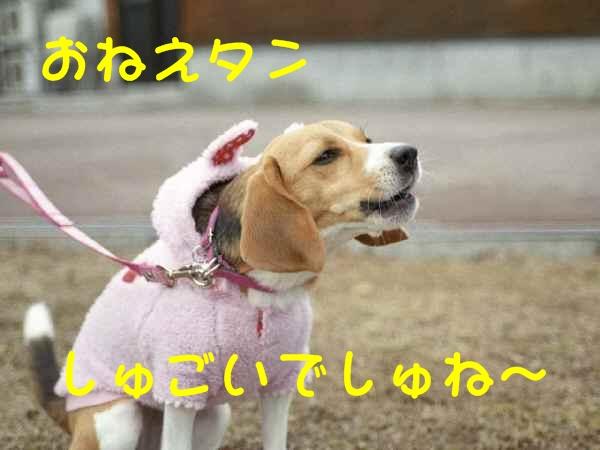 c0166622_1055147.jpg