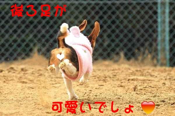 c0166622_1073319.jpg