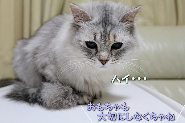c0211109_150137.jpg