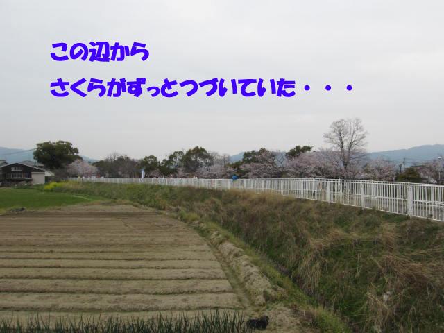 c0109663_2035521.jpg