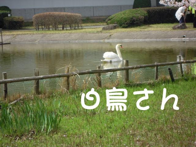 c0166622_1061962.jpg