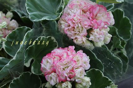 a0132041_20112010.jpg