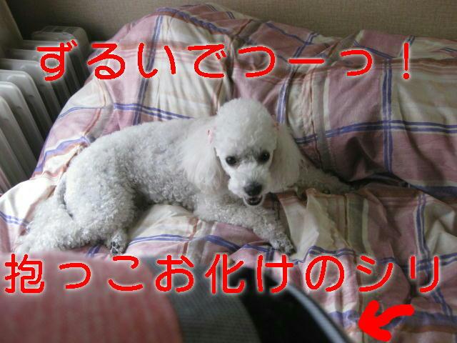 c0117239_9555225.jpg