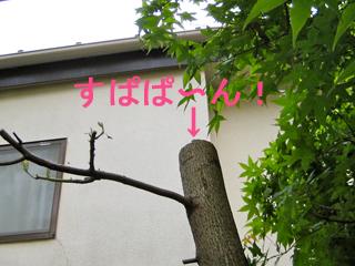 c0211810_856428.jpg