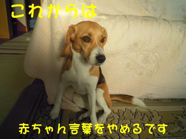 c0166622_22313174.jpg