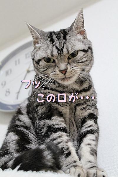 c0211109_393060.jpg