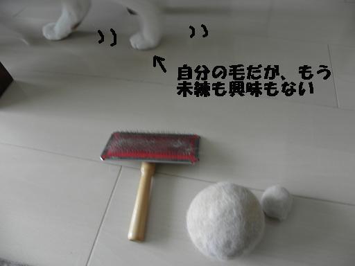e0216469_19591695.jpg