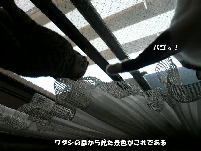 e0094407_16151740.jpg