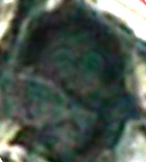 e0103408_17345275.jpg