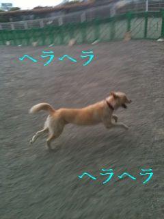 c0191415_1774741.jpg