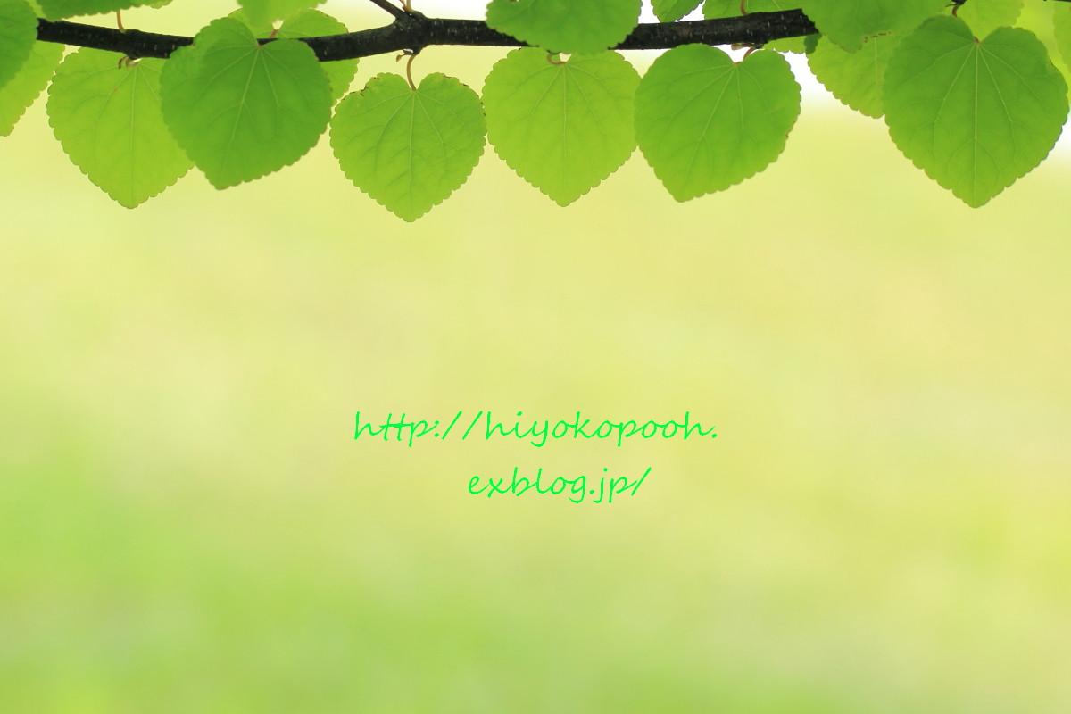 c0146251_2055430.jpg
